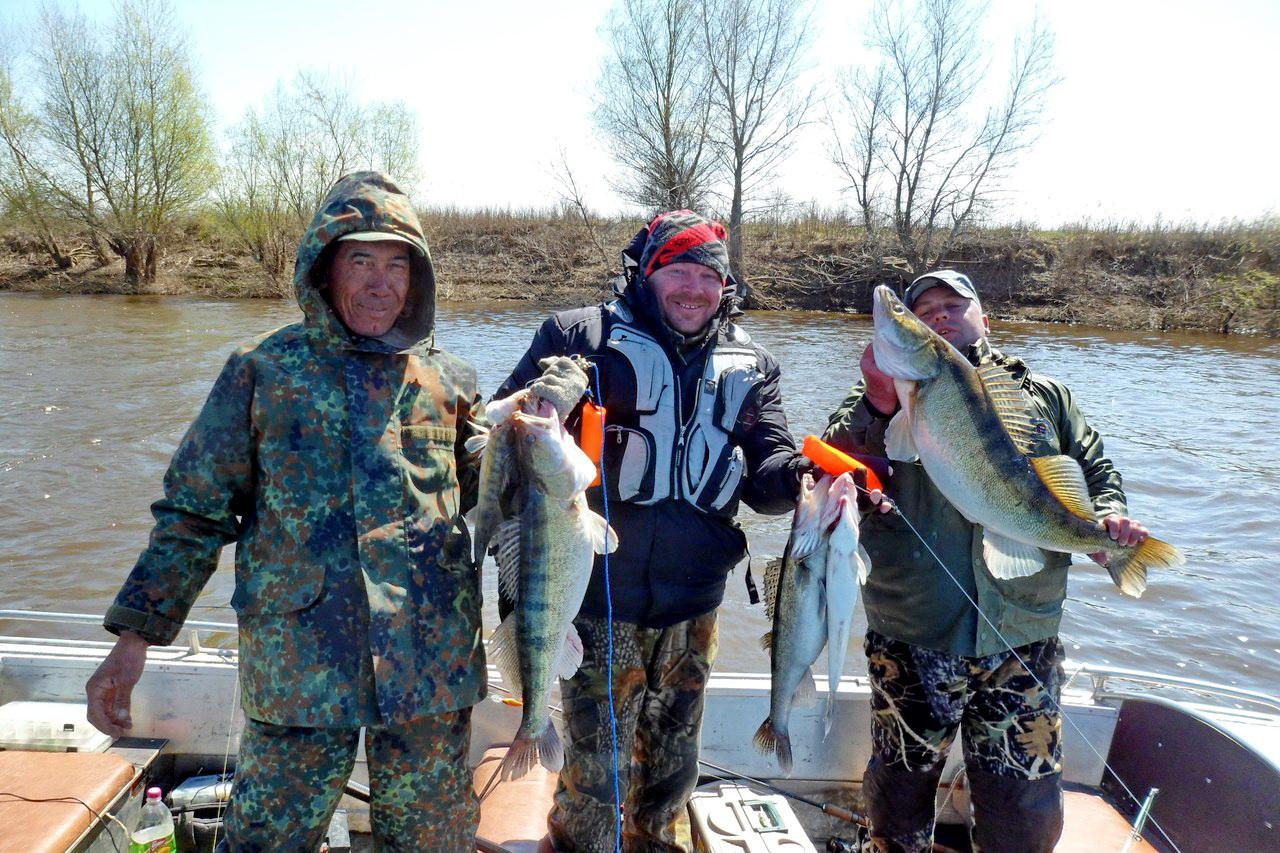 На что ловить судака весной на ахтубе